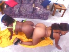Big Titty Ebony Lesbians Go Ass To Ass On Double Ended Dong